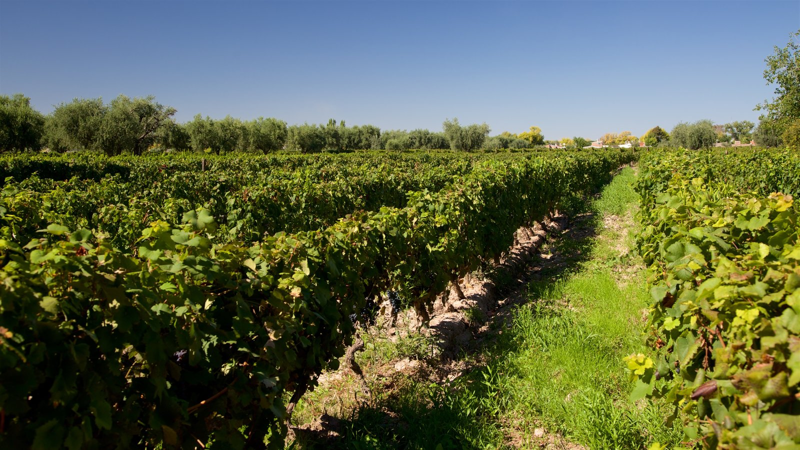 Bodega Lagarde caracterizando fazenda