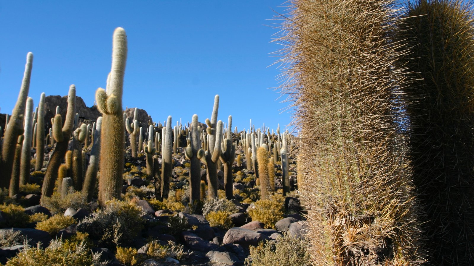 Salar de Uyuni que inclui paisagens do deserto