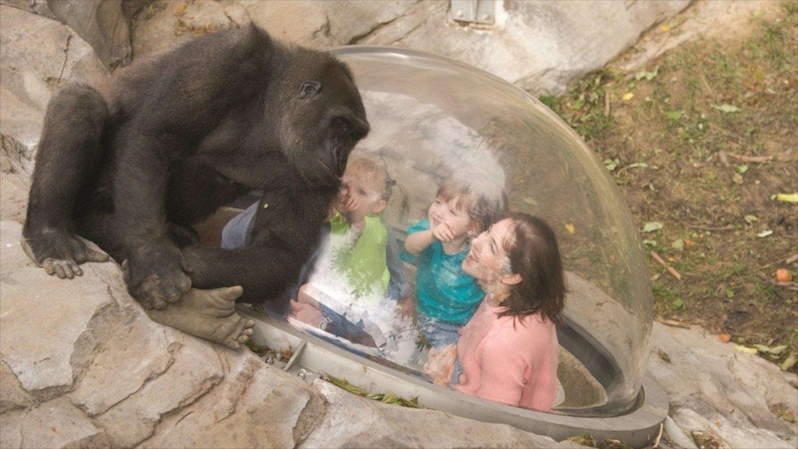 Omaha mostrando animais terrestres e animais de zoológico assim como uma família