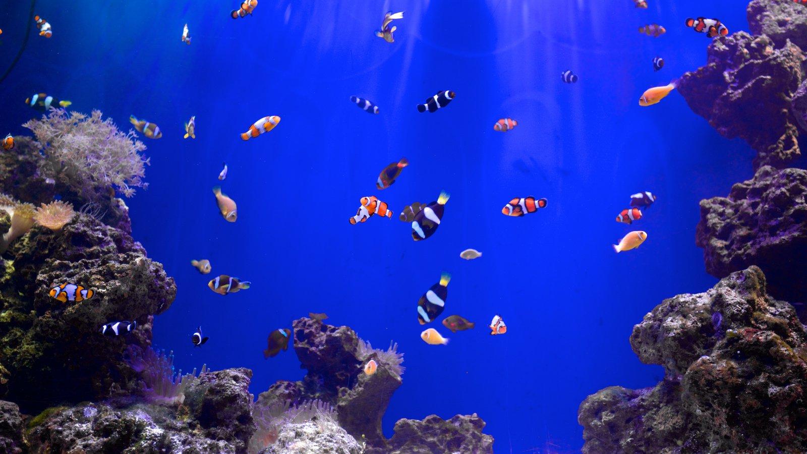 Mote Marine Aquarium caracterizando vida marinha
