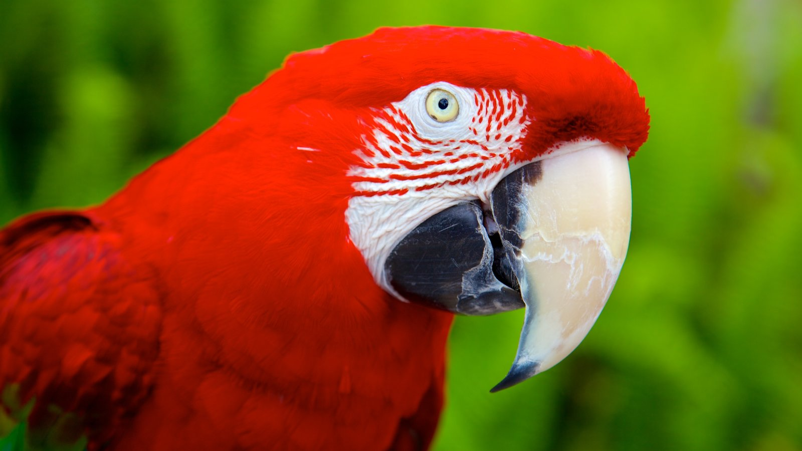 Sarasota Jungle Gardens mostrando vida das aves