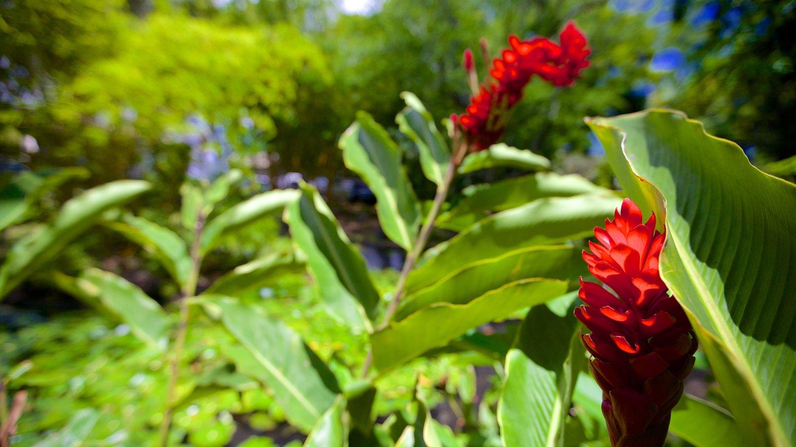 Parc Bougainville mostrando flores