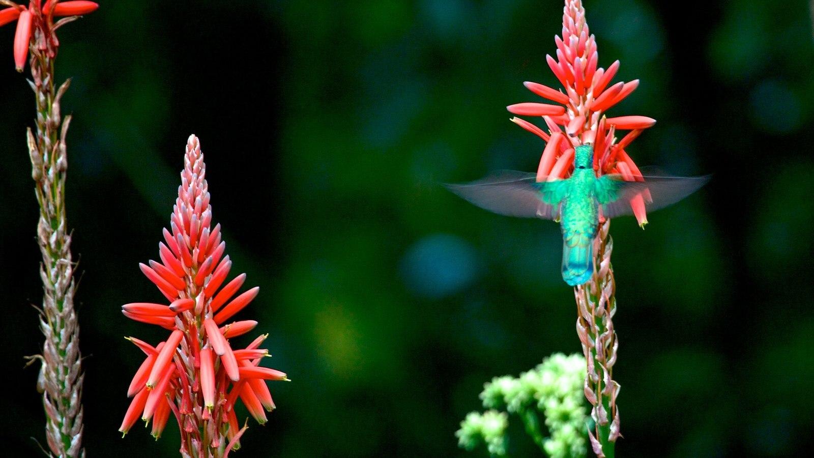 La Carolina mostrando flores, flores silvestres e vida das aves