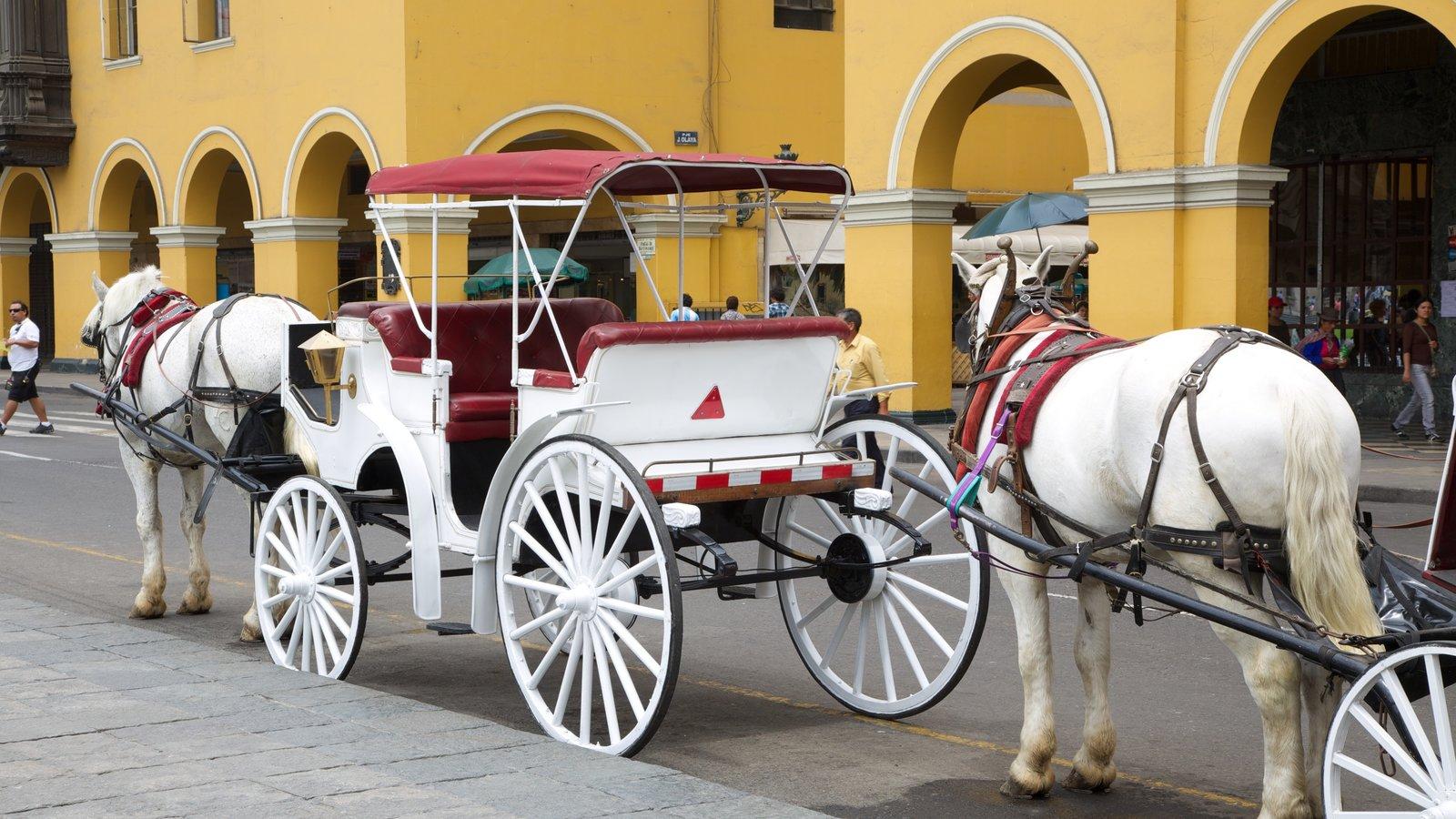 Plaza mayor montrant ville, scènes de rue et animaux terrestres