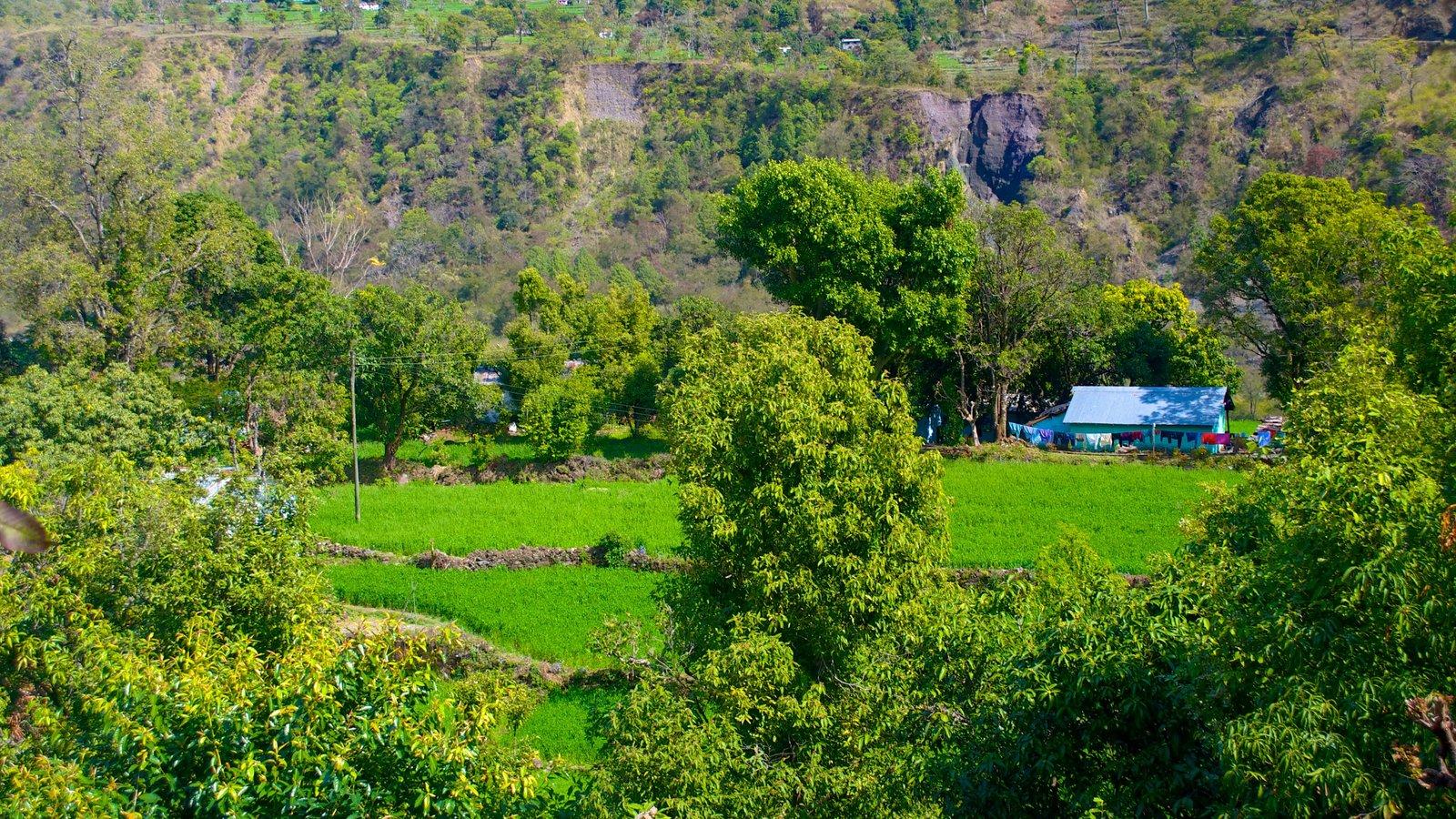 BhujiaGhat showing farmland