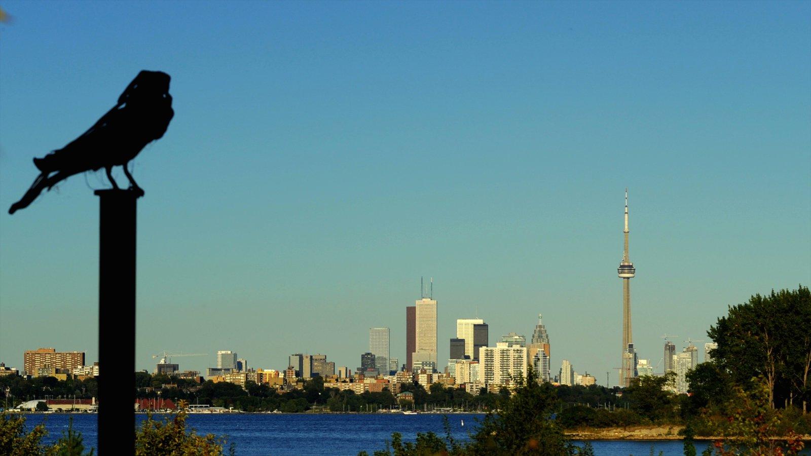 Centre Island which includes city views, a skyscraper and bird life