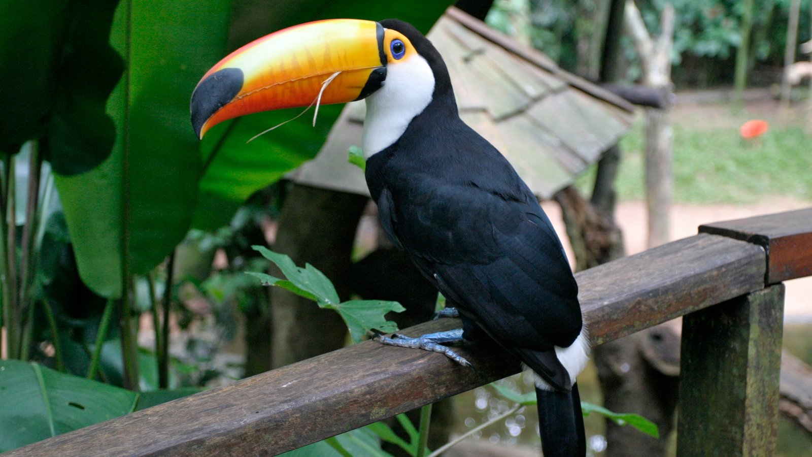 Região Sul caracterizando vida das aves e animais de zoológico