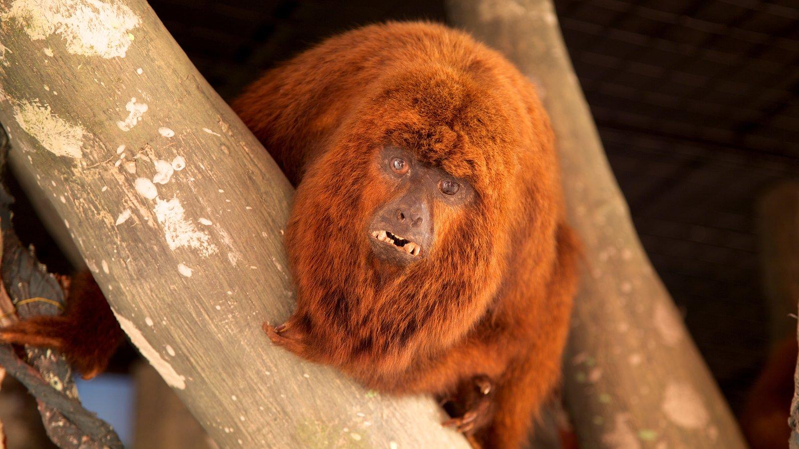 Ecomuseu que inclui animais de zoológico