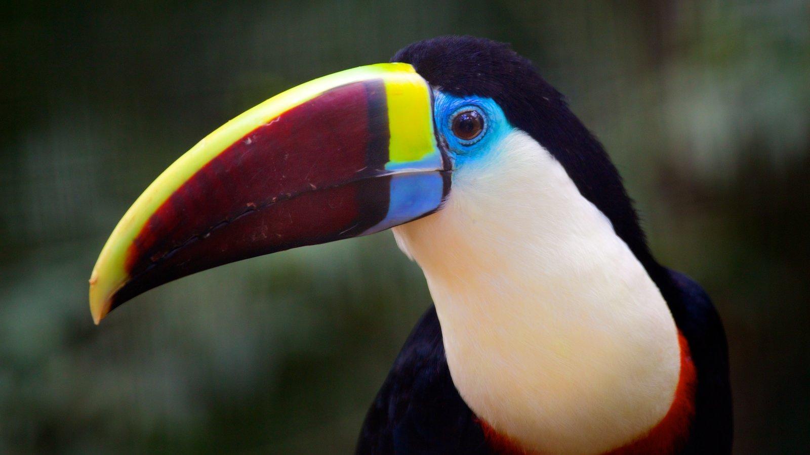 Parque das Aves mostrando animais de zoológico, um parque e vida das aves