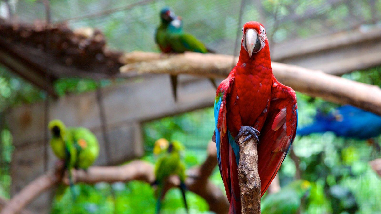 Parque das Aves que inclui vida das aves e animais de zoológico