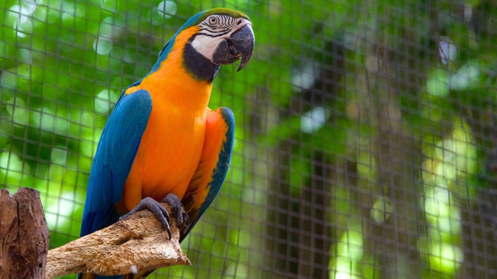Parque das Aves caracterizando animais de zoológico e vida das aves