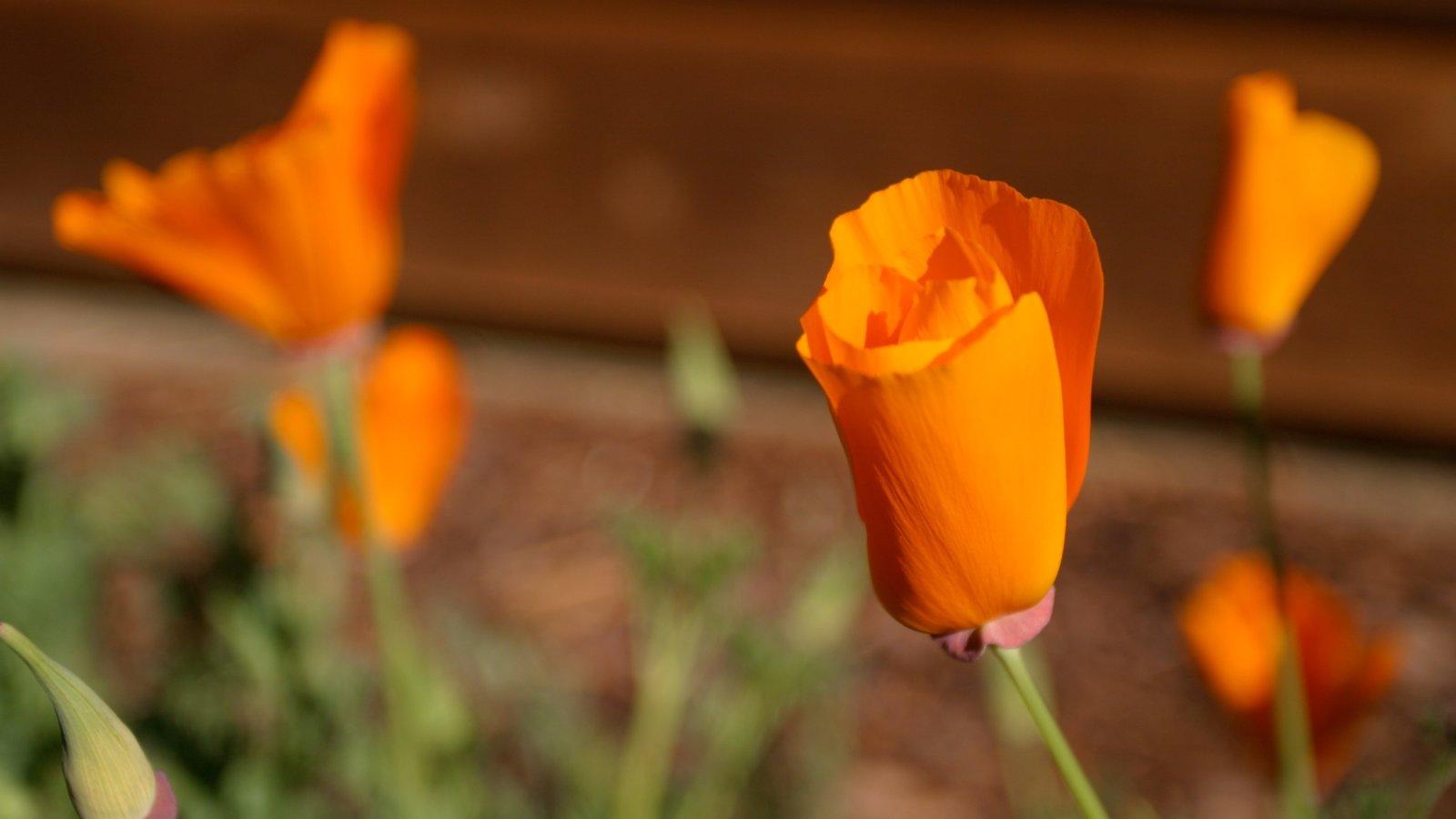 Yosemite Valley mostrando paisagem, flores e flores silvestres