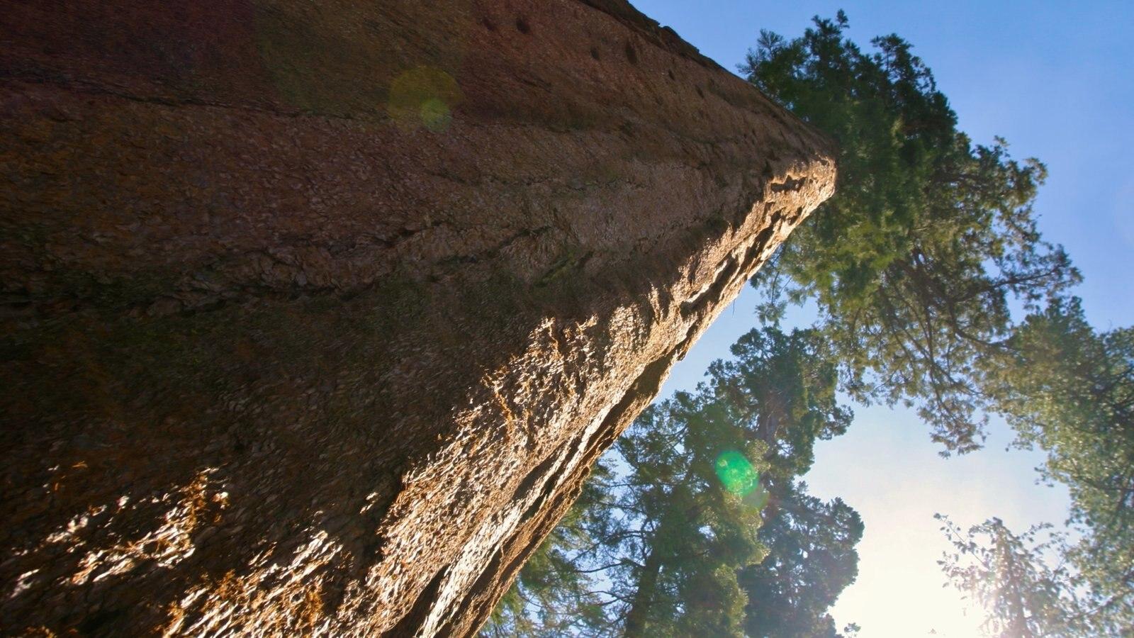 Yosemite Valley que inclui florestas