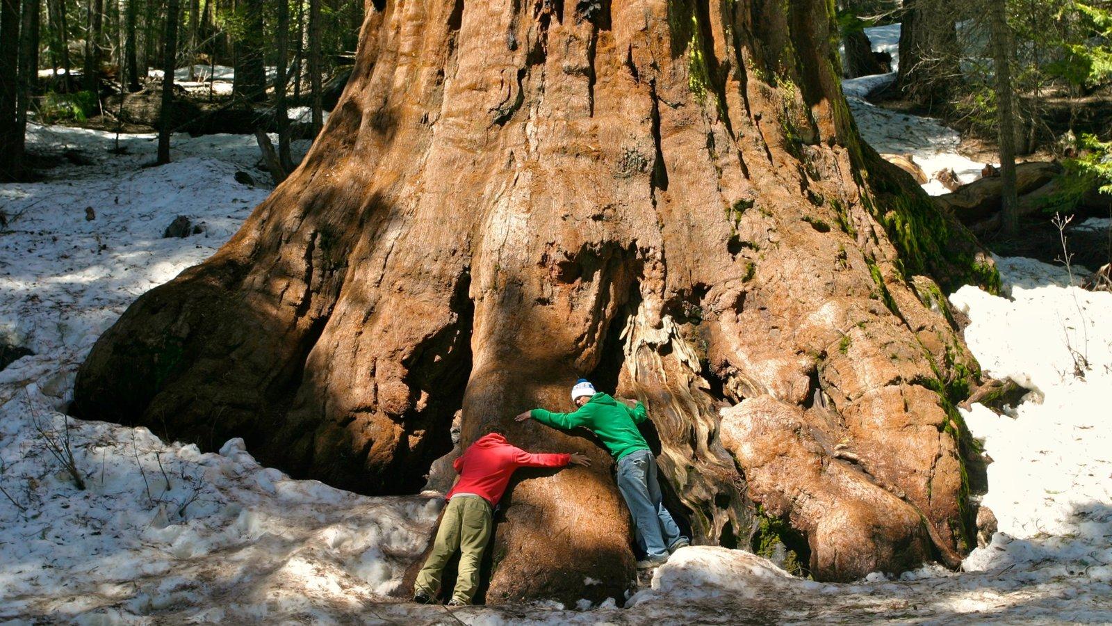 Yosemite Valley mostrando cenas de floresta