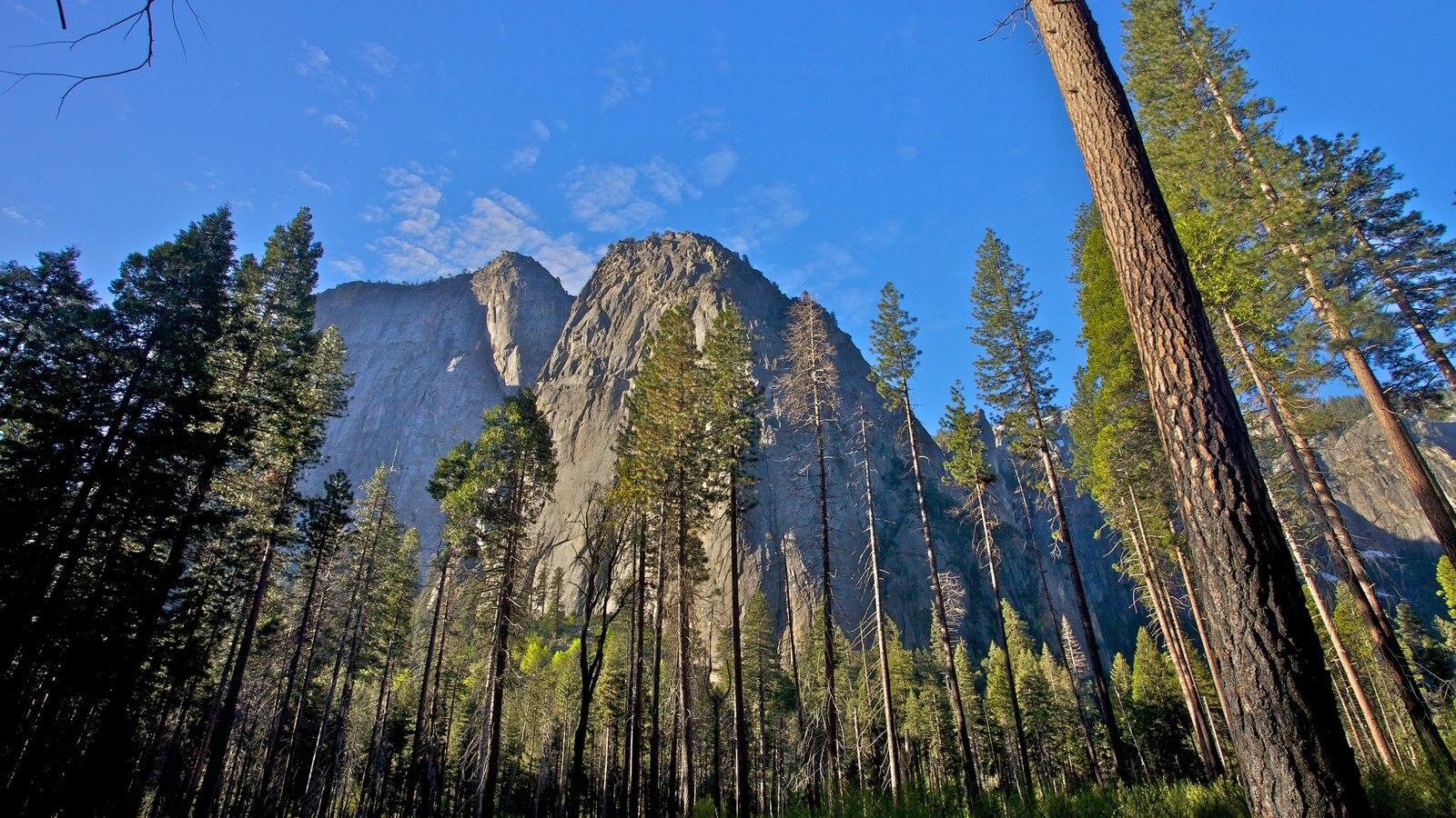 Parque Nacional Yosemite mostrando bosques