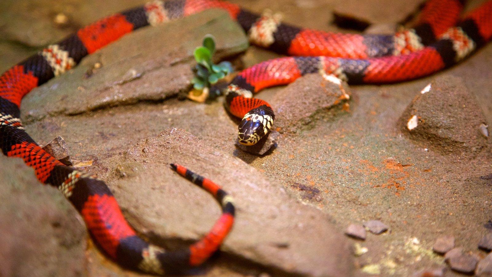 Foz do Iguaçu mostrando animais de zoológico e animais perigosos