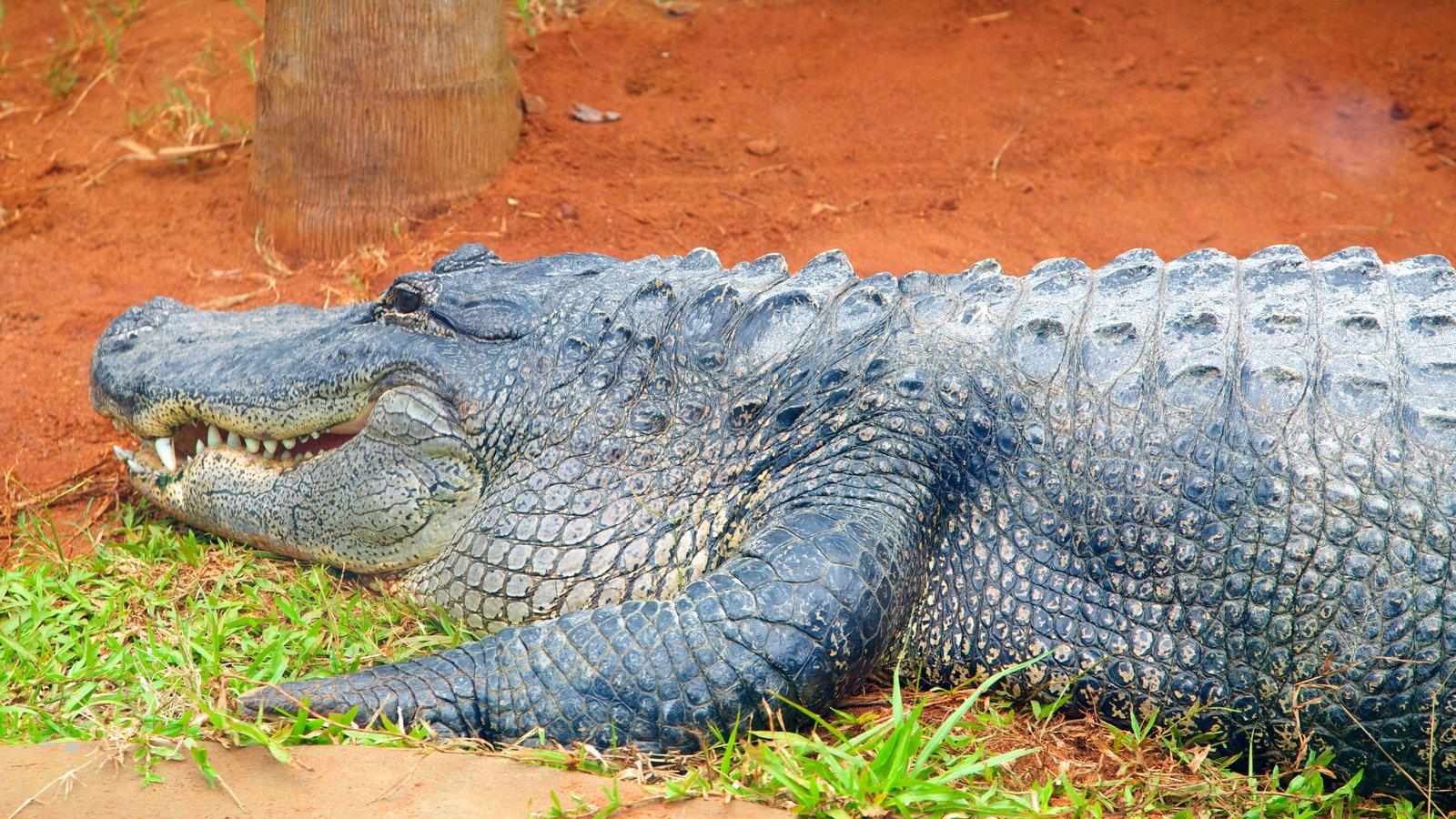 Foz do Iguaçu que inclui animais de zoológico e animais perigosos