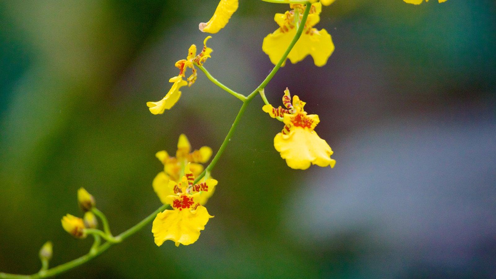 Foz do Iguaçu que inclui flores
