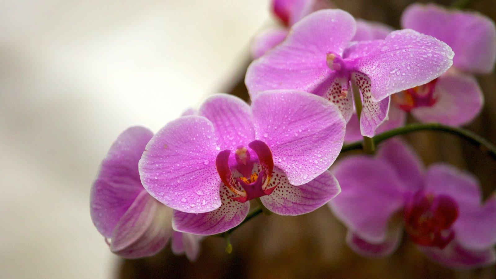 Foz do Iguaçu caracterizando flores