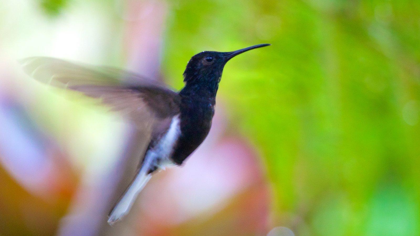 Foz do Iguaçu caracterizando vida das aves