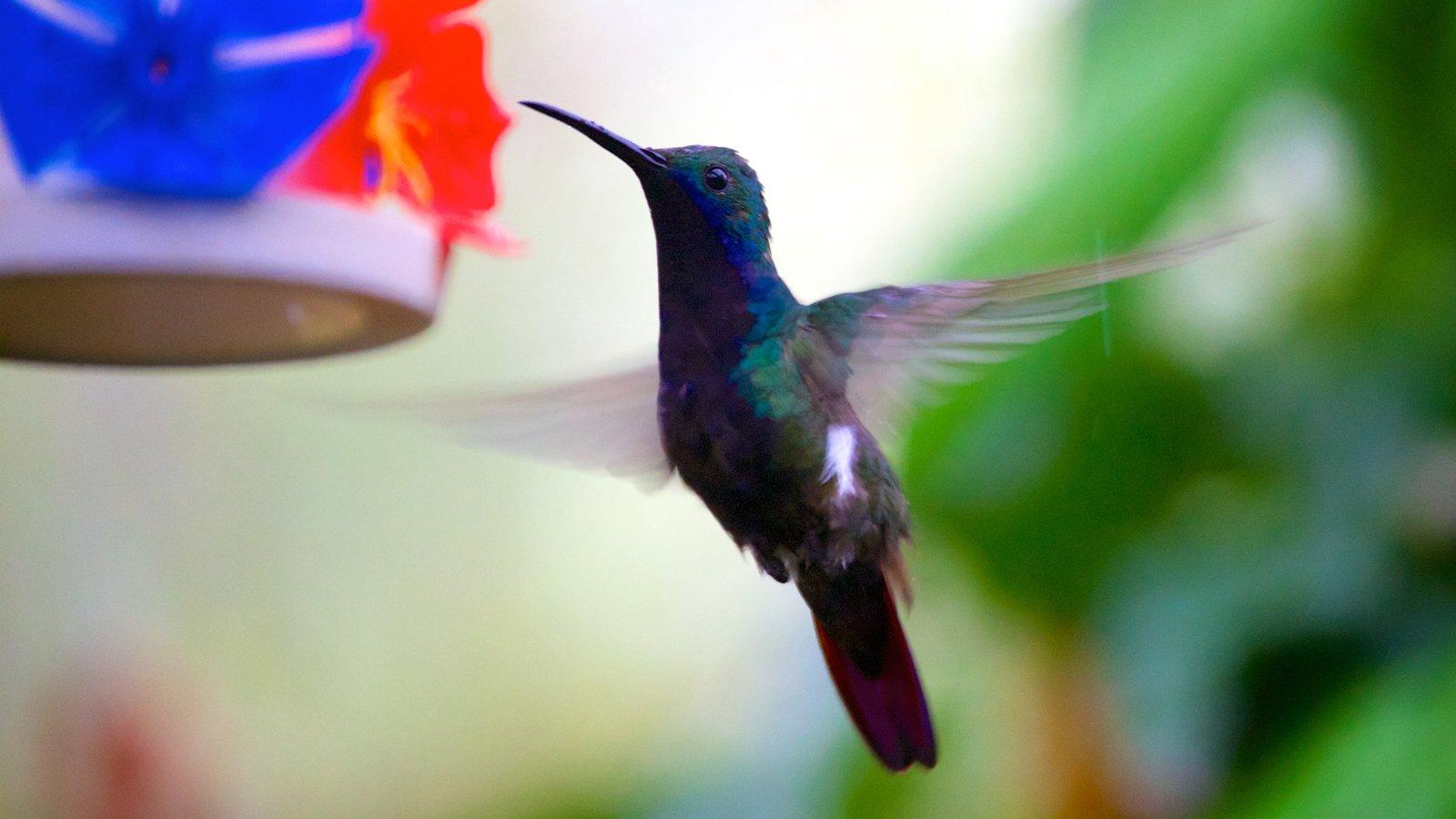 Foz do Iguaçu mostrando vida das aves