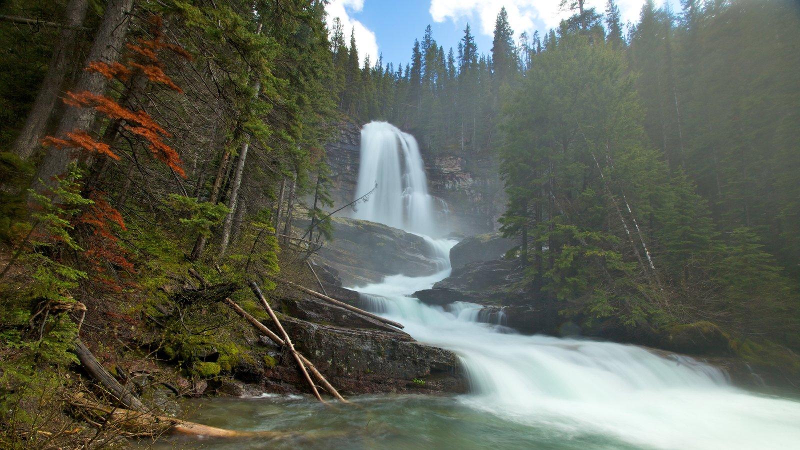 Parque Nacional de los Glaciares que incluye bosques, una cascada y un río o arroyo
