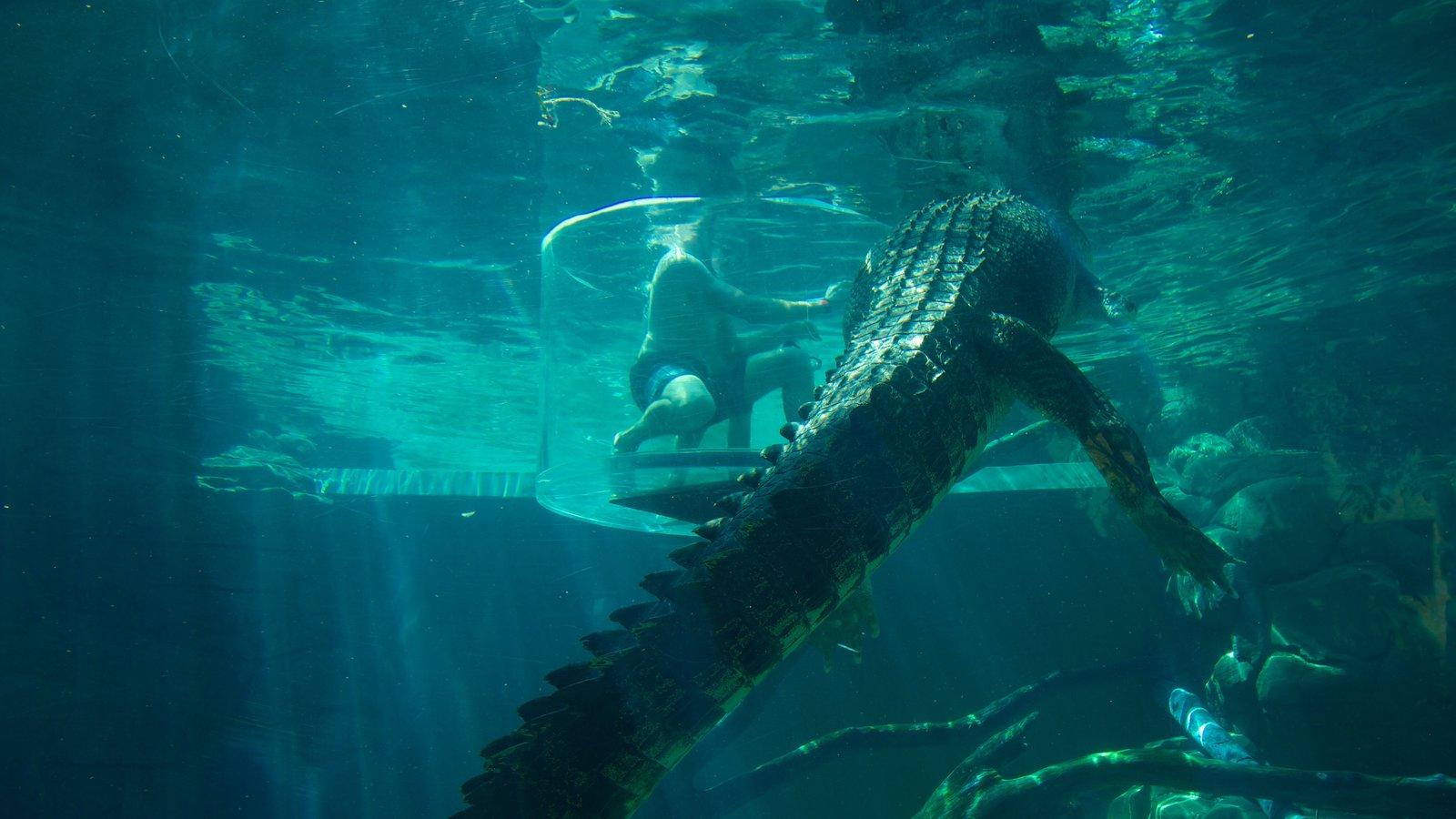 Crocosaurus Cove which includes dangerous animals