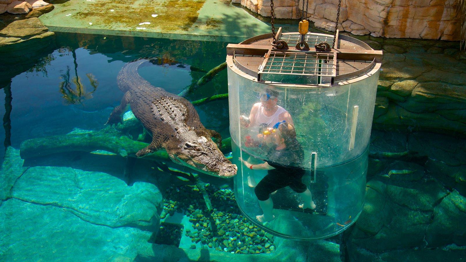 Crocosaurus Cove showing dangerous animals and zoo animals