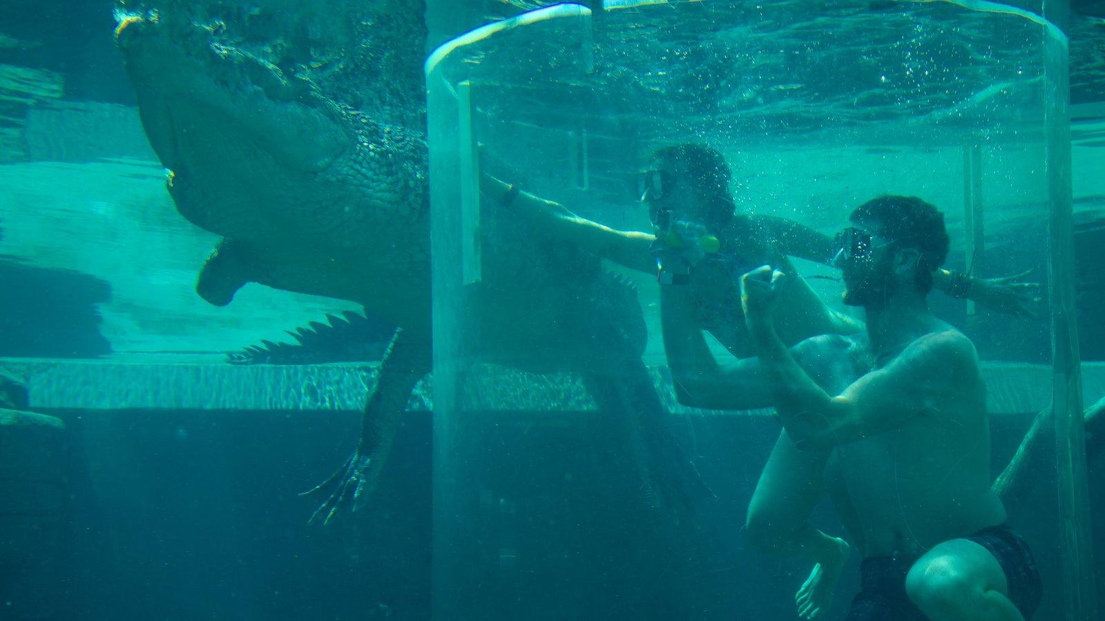 Crocosaurus Cove featuring dangerous animals and zoo animals
