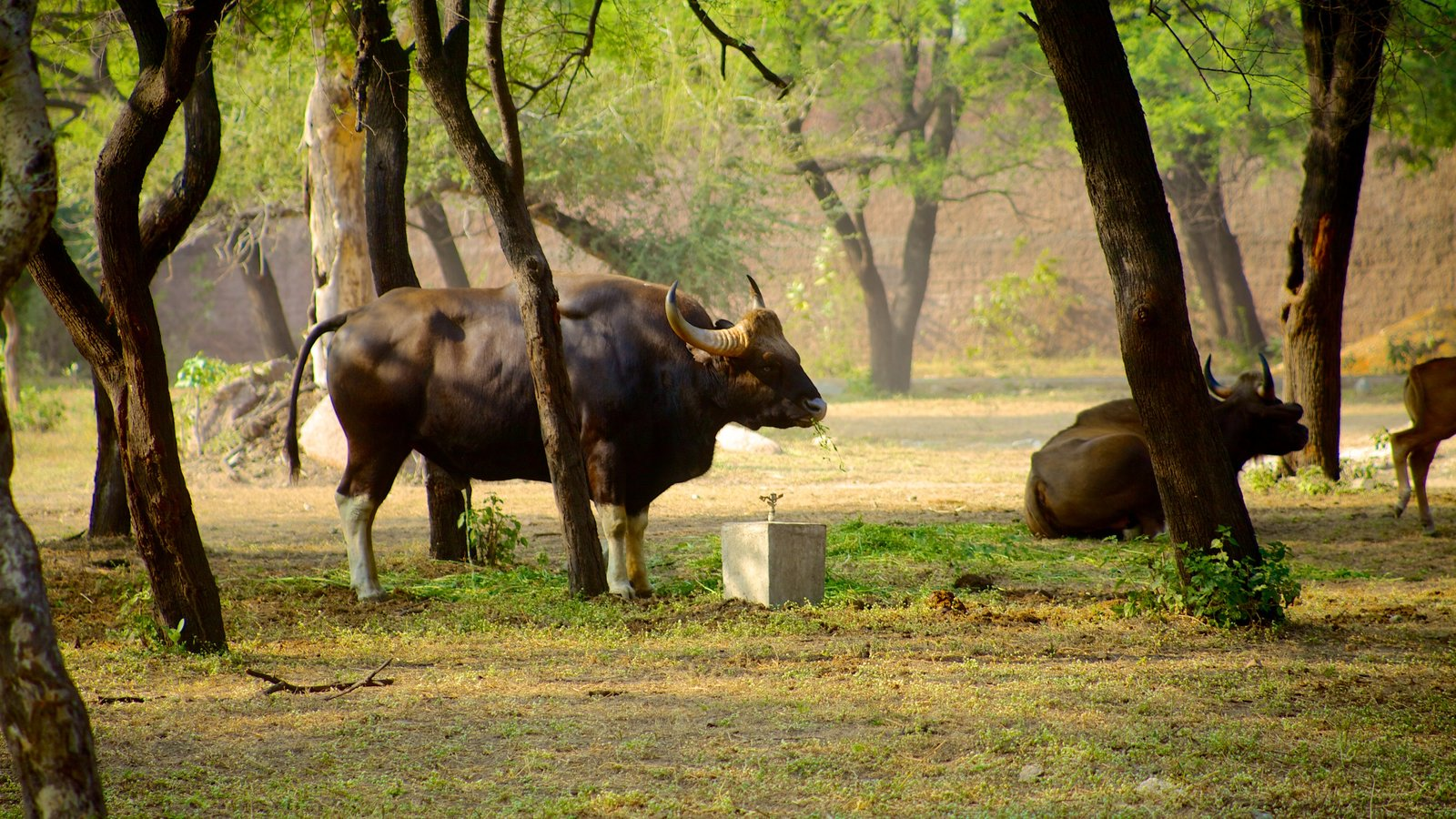 nehru zoological park Nehru zoological park, hyderabad overview with about a 100 species finding habitat here, the nehru zoological park is one of the most enjoyed attractions in the city it is named after pandit jawaharlal nehru and was opened to the public in 1963.