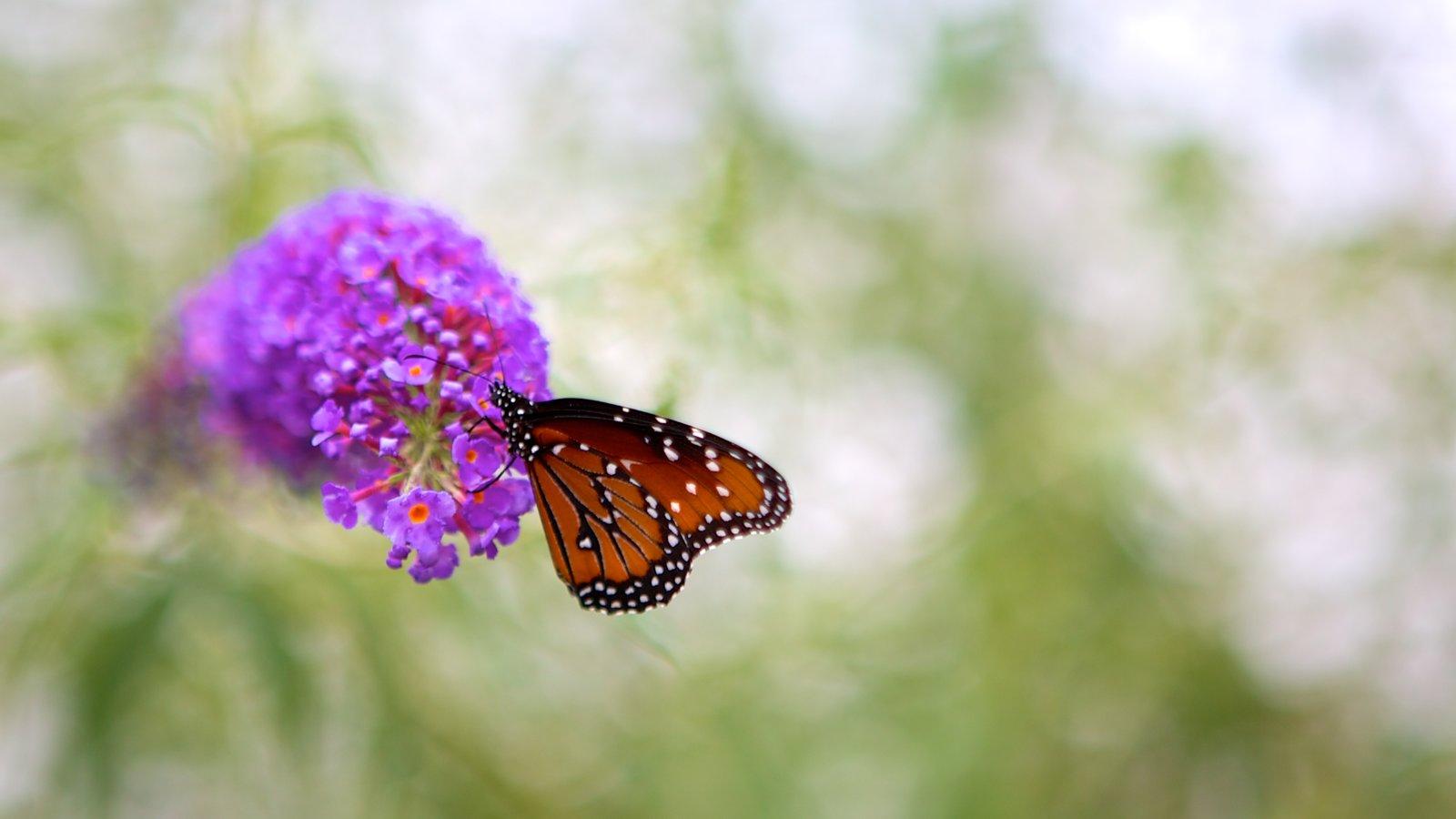 Hershey Gardens caracterizando animais e flores