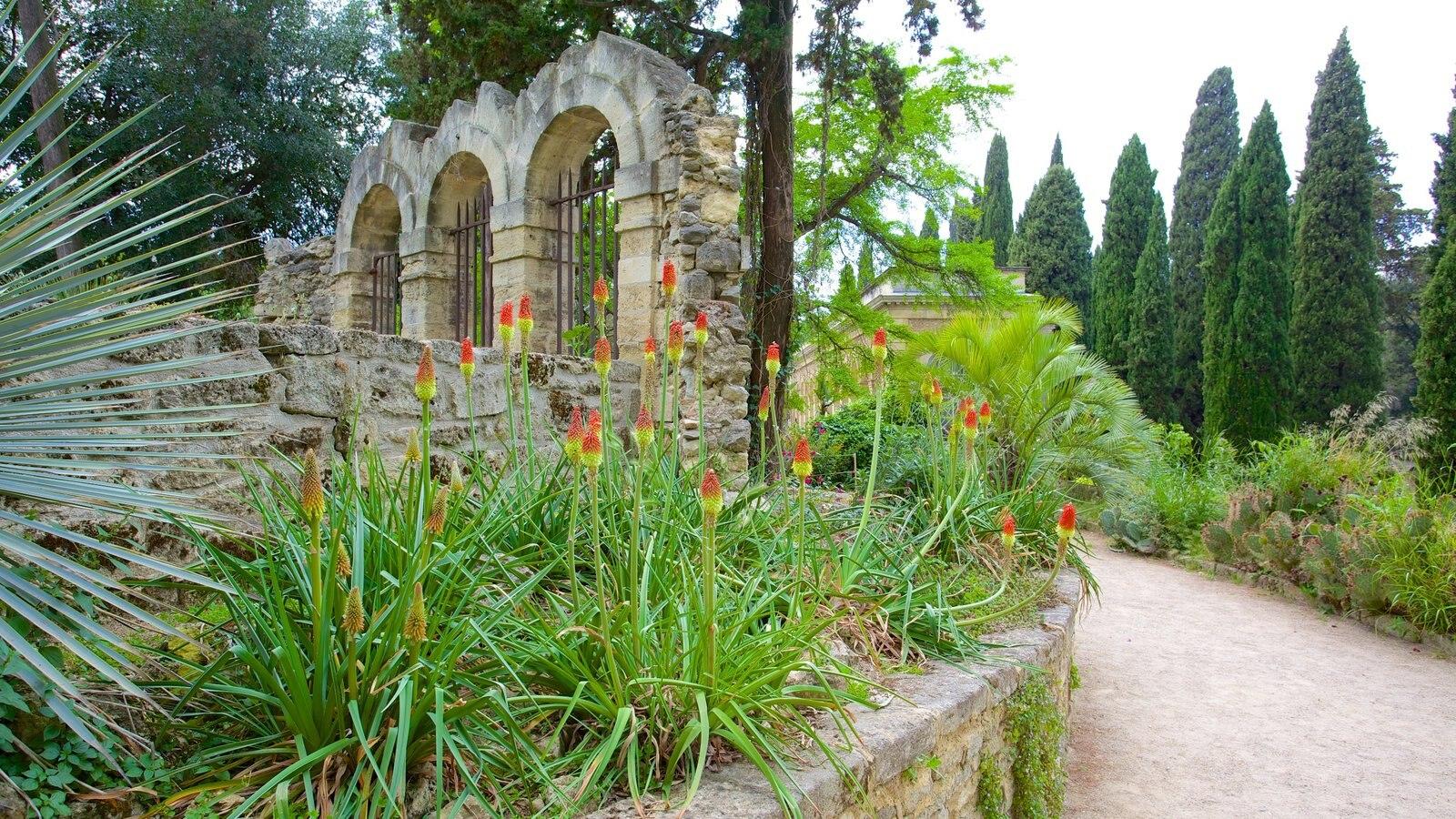 Gardens parks pictures view images of jardin des - Jardin des plantes de montpellier ...