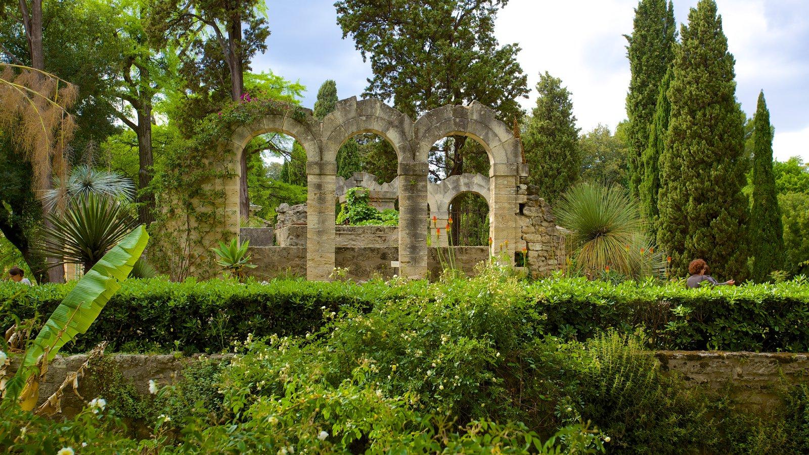 """Résultat de recherche d'images pour """"jardin de plantes montpellier"""""""