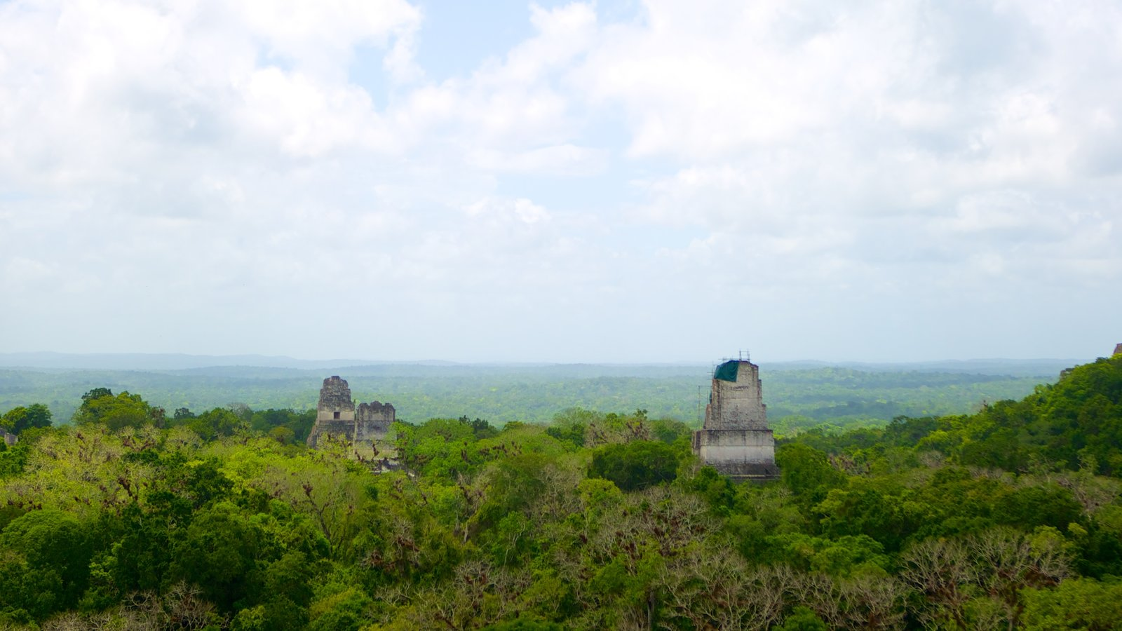 Tikal which includes forests and landscape views