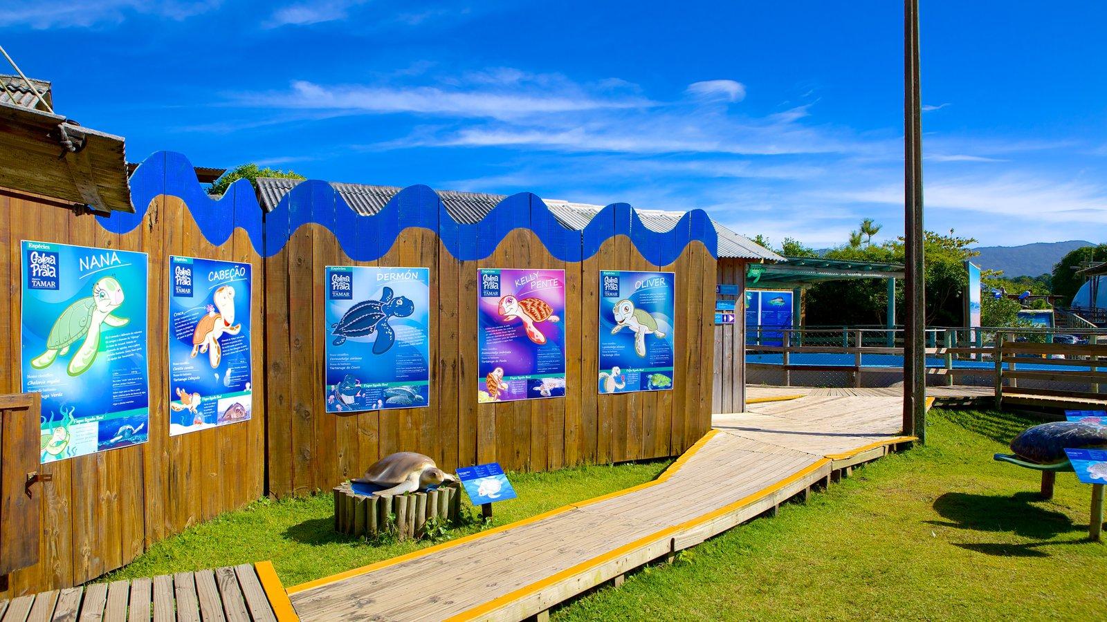 Projeto Tamar caracterizando animais de zoológico
