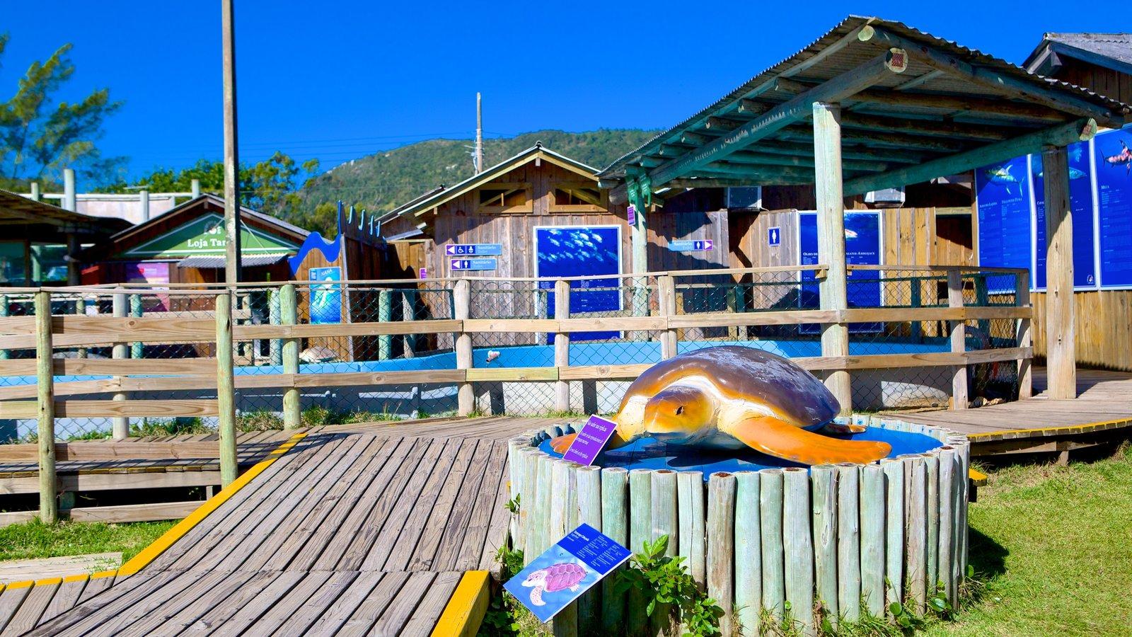 Projeto Tamar que inclui animais de zoológico
