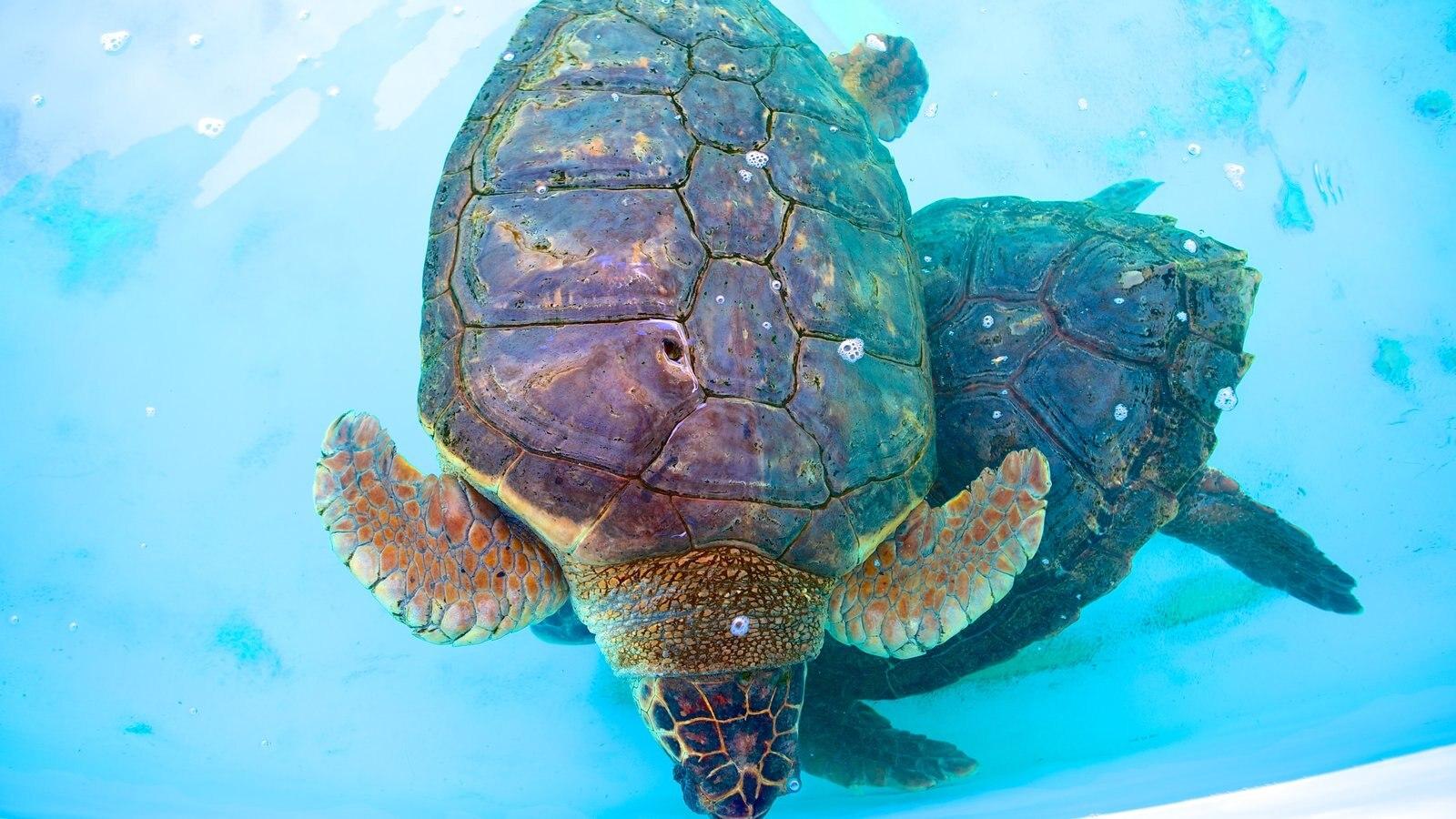 Projeto Tamar mostrando animais de zoológico e vida marinha