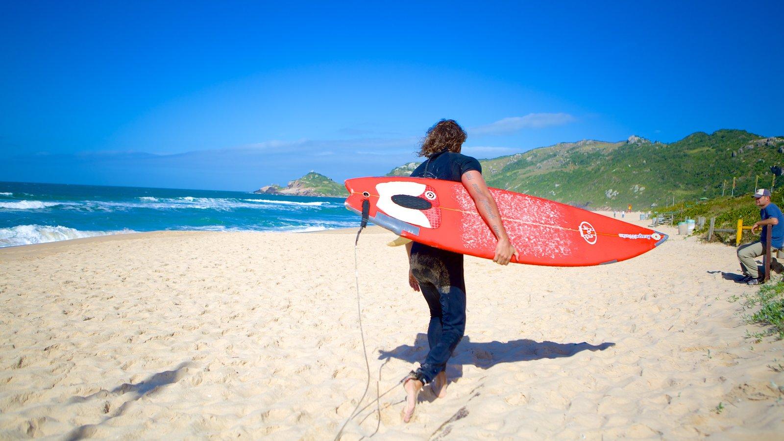 Praia Mole que inclui uma praia de areia e surfe assim como um homem sozinho