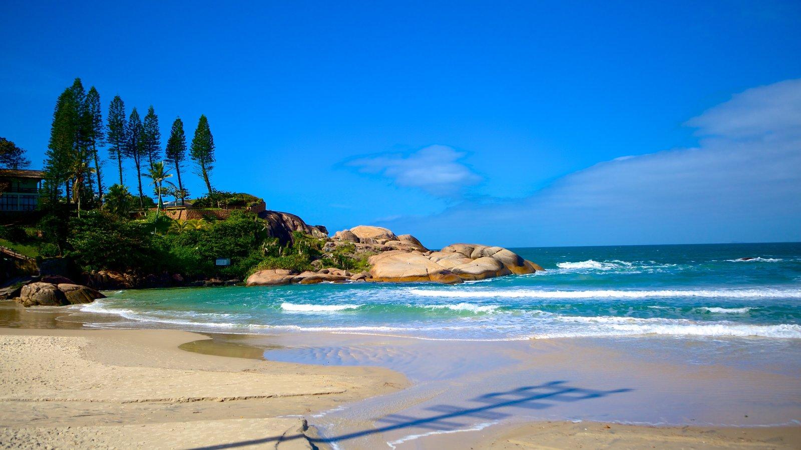 Praia da Joaquina mostrando uma praia