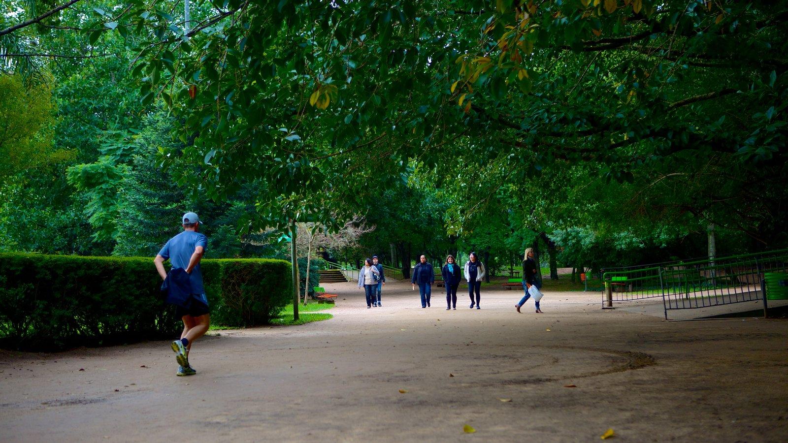 Parque Moinhos de Vento que inclui escalada ou caminhada e um jardim assim como um homem sozinho