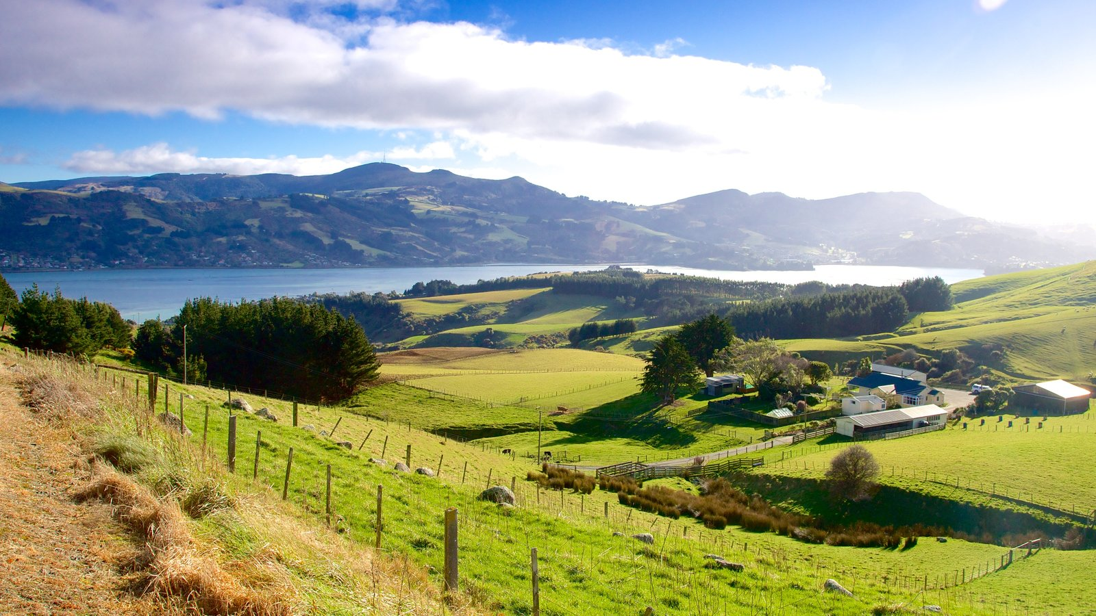Dunedin which includes tranquil scenes and landscape views