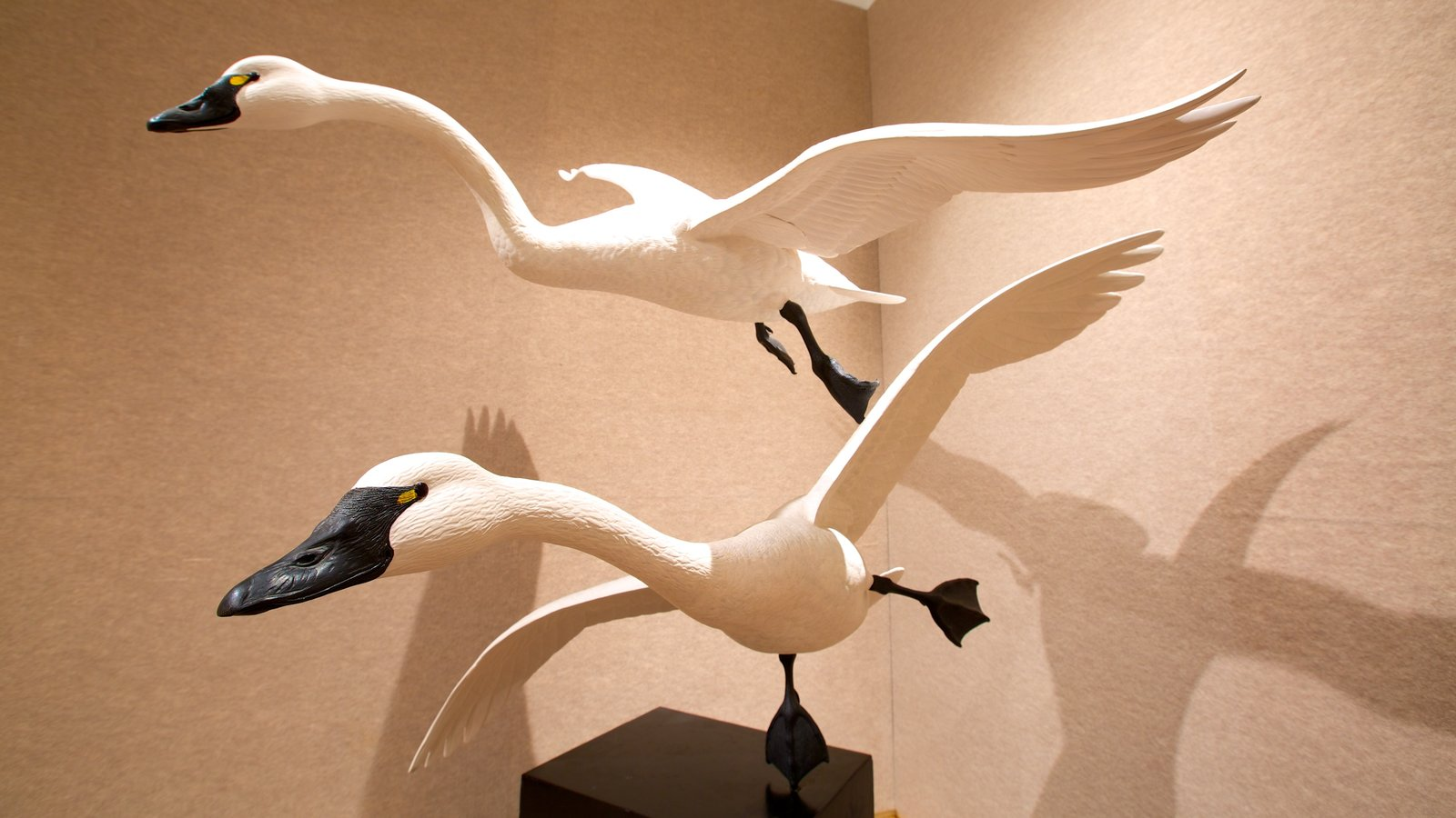 Ward Museum of Wildfowl Art which includes interior views, bird life and art