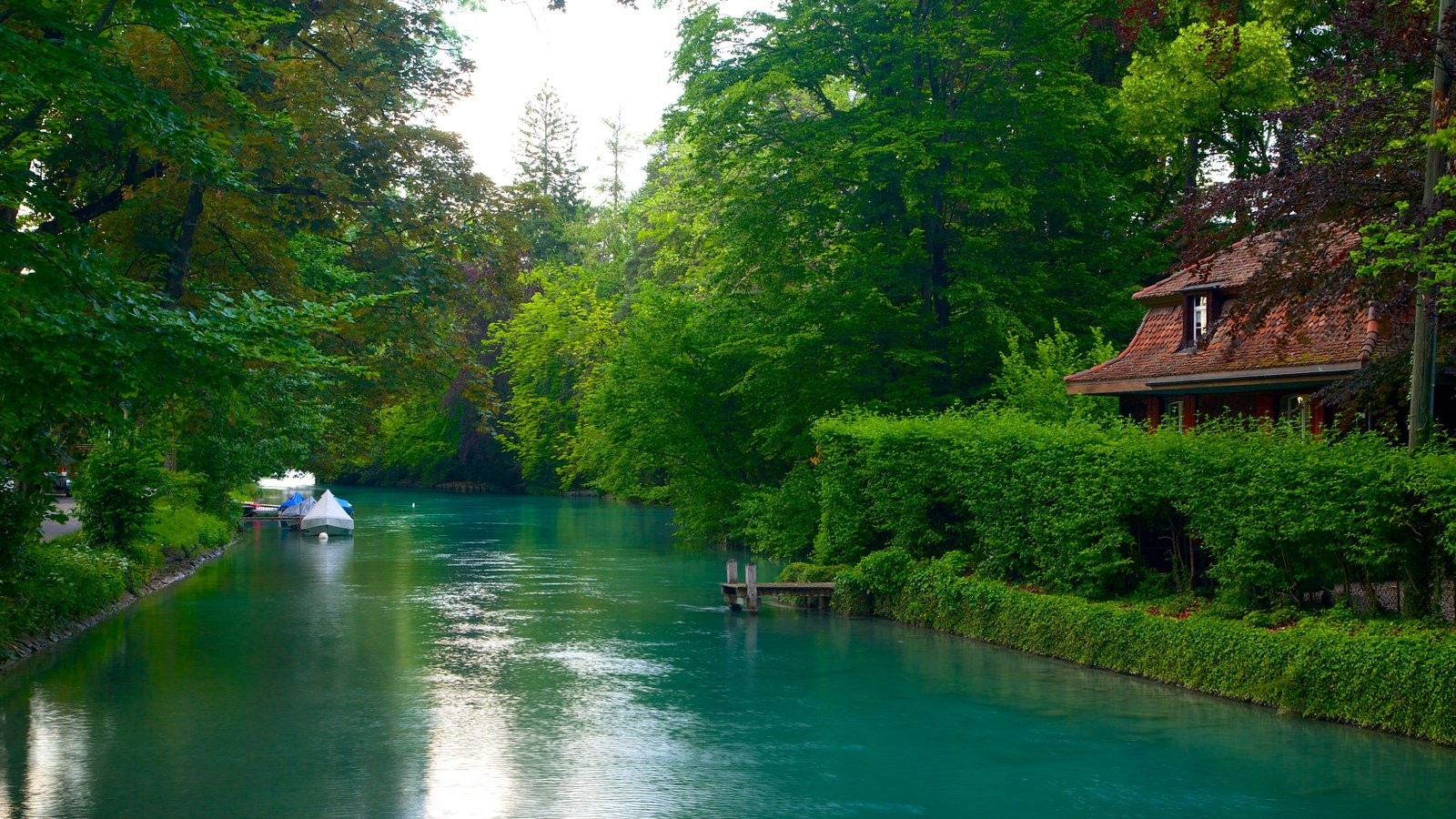Thun que incluye un río o arroyo y bosques