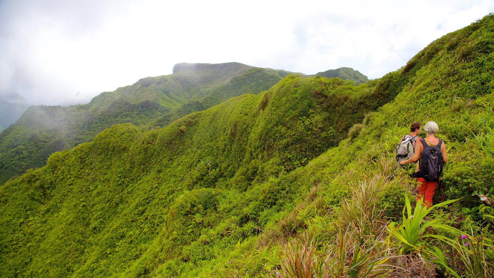 Tahiti which includes rainforest, landscape views and hiking or walking