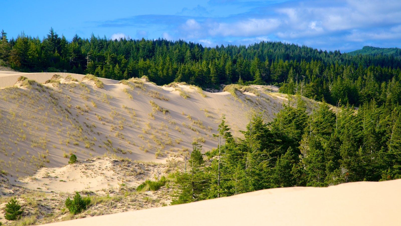 Reedsport which includes forests and desert views