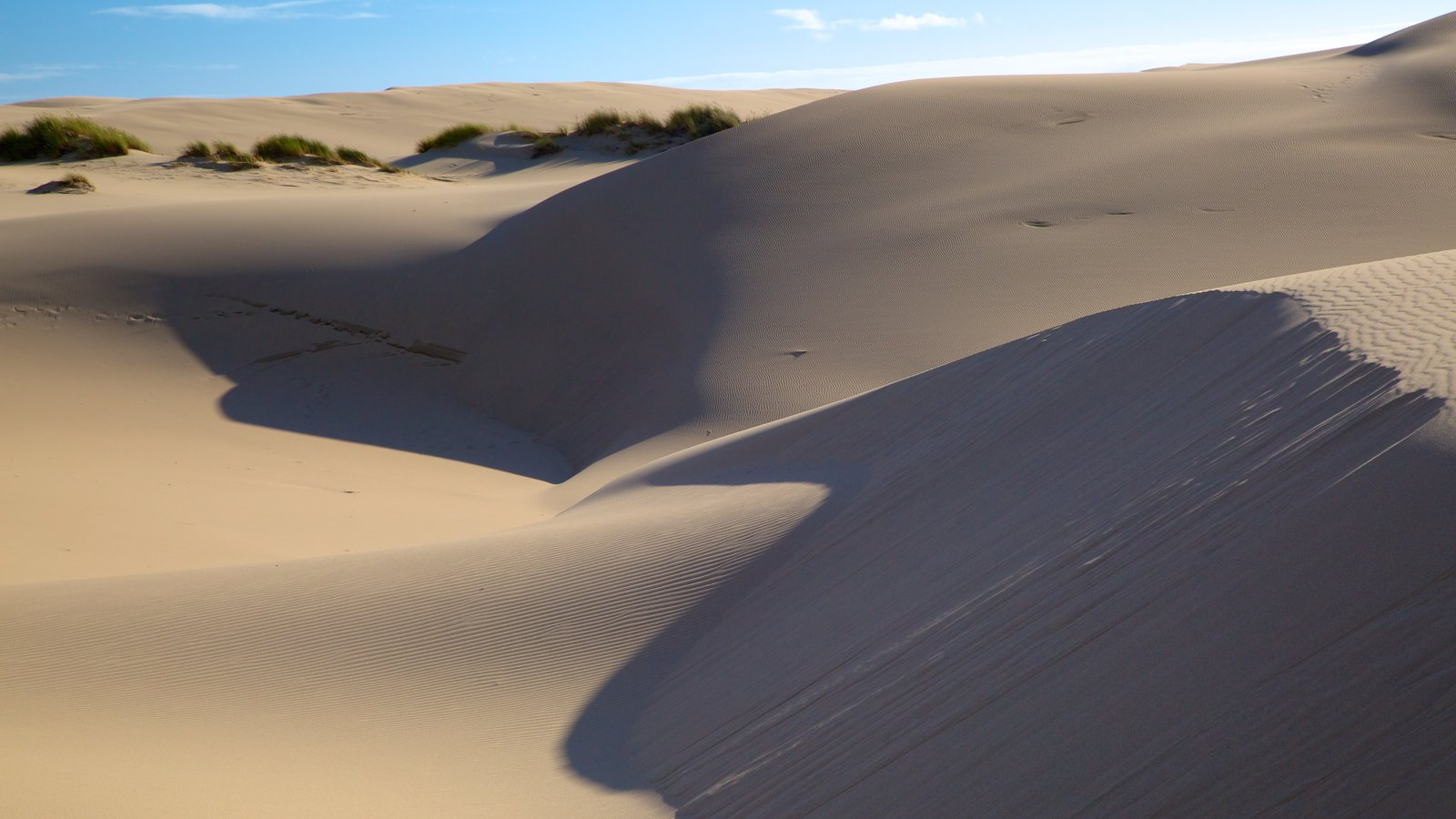 Oregon Dunes National Recreation Area which includes desert views and landscape views
