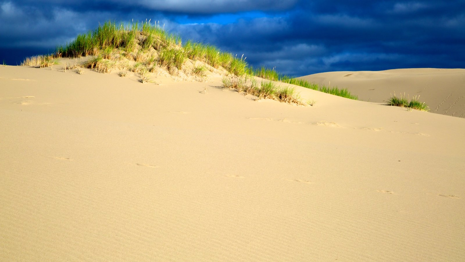 Oregon Dunes National Recreation Area which includes landscape views and desert views