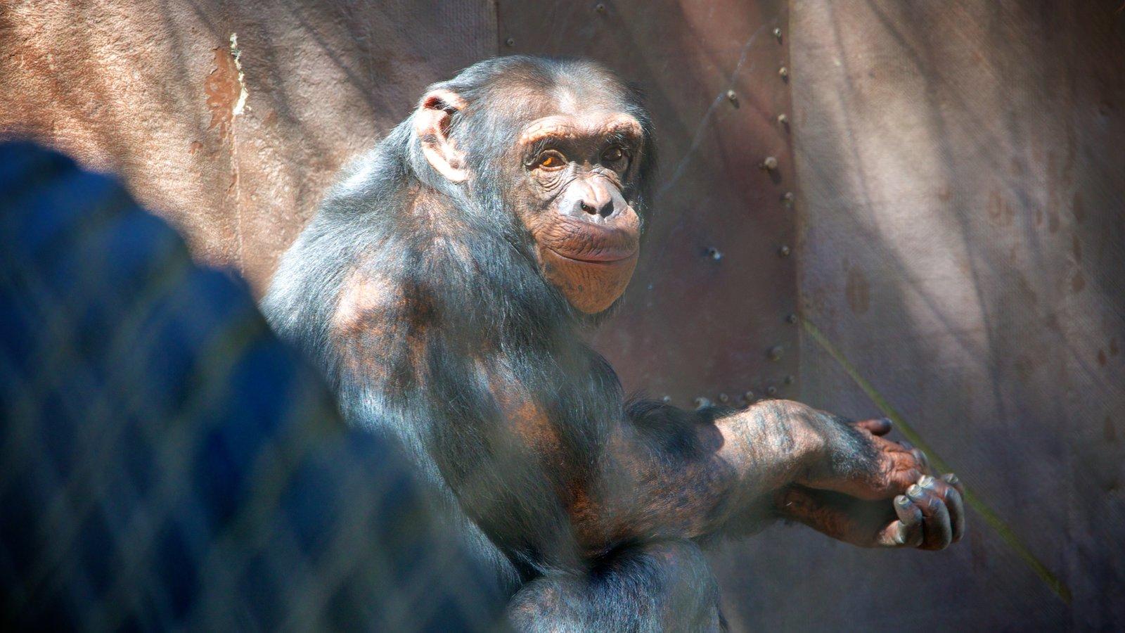 West Coast Game Park Safari mostrando animais de zoológico e animais fofos ou amigáveis