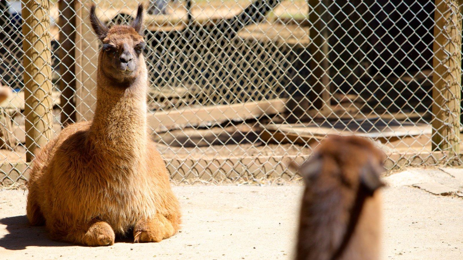 West Coast Game Park Safari que inclui animais de zoológico e animais terrestres