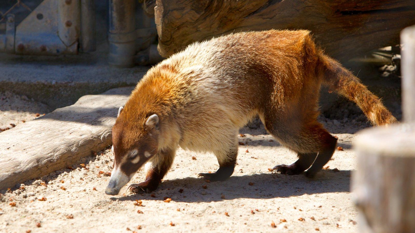 West Coast Game Park Safari que inclui animais fofos ou amigáveis e animais de zoológico